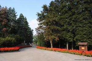 MONTE AVALA - Uno dei tanti sentieri alberati